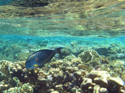 koraal en wateroppervlakte