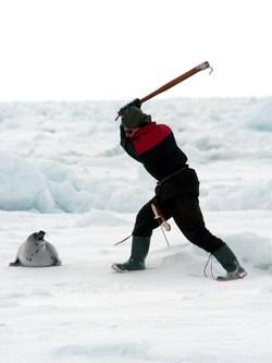 Zeehonden jacht