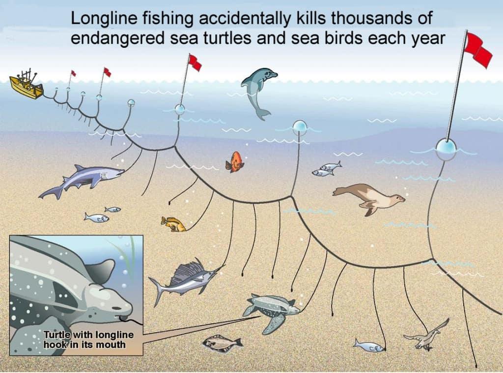 """Longline"" vissen"